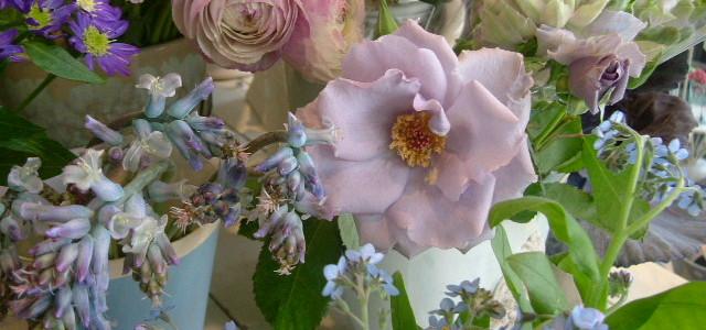 市川バラ園のオンディーナの咲く春のオークリーフ
