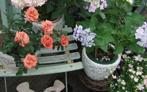 5月の店頭に紫陽花の花