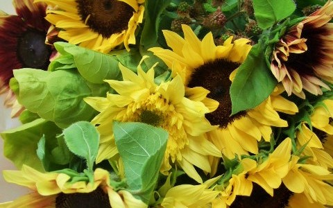 ひまわりミックスとブラックベリーの花束