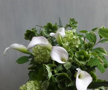 母の日のアレンジメント(白いカラーとグリーンミックス)