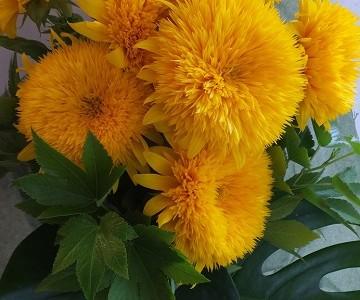 八重咲きひまわりとグリーンのシンプルな花束