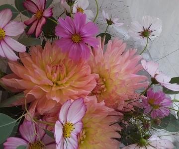 ダリアとコスモスの花束
