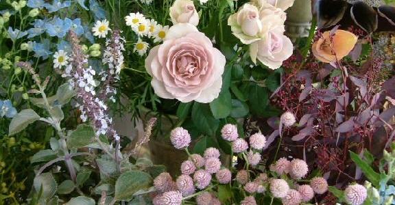 バラ・ダイヤモンドグレーの咲くある冬の日の店内