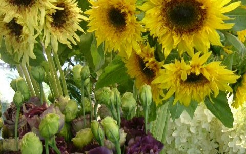 3種の向日葵のある7月の店内