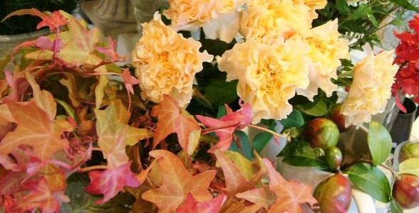 紅葉したアイビーとバラ
