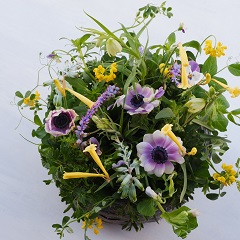 春の草花のパラレルアレンジメント