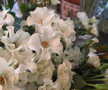 今日のお店の花たち