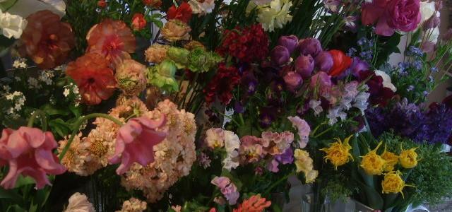 1月の終わり。春の花たちの饗宴。